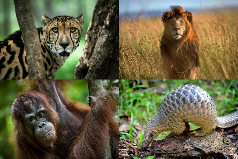 extinction of animal The number of wild animals living on earth is set to fall by two-thirds by 2020, according to a new report, part of a mass extinction that is destroying the natural world upon which humanity depends.